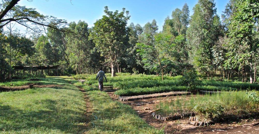 Kweisos Farmhouse Koru - Western Kenya - Bunson Travel - CWT